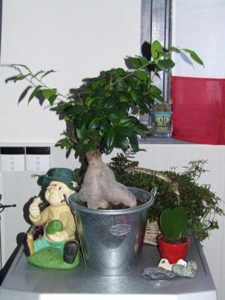 Du vert dans mon microcosmos... 2008_124