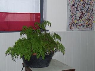 Du vert dans mon microcosmos... 2008_125