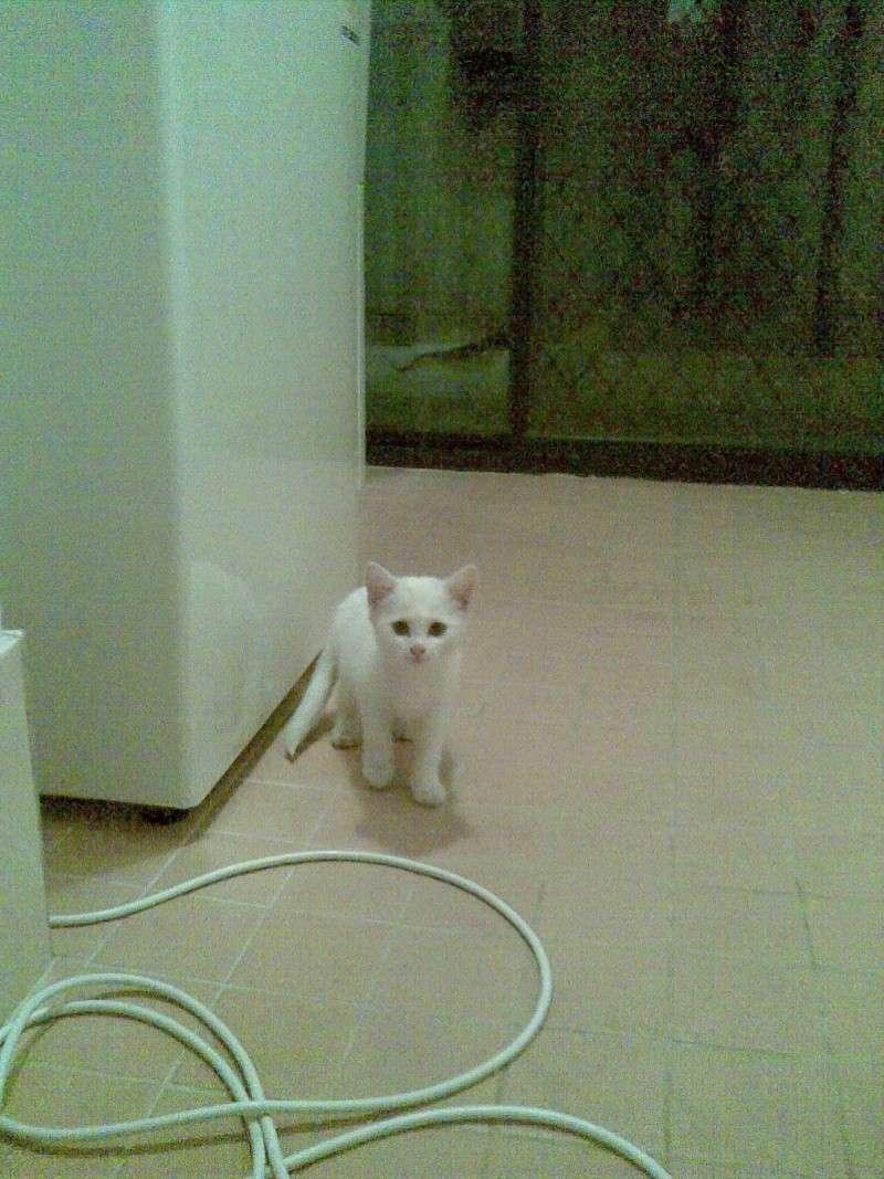 我们家来了一只小白 26042011