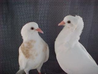 Baby Pigeon Photos (Weekly growth comparison, newborn to 4 weeks) 2008-021