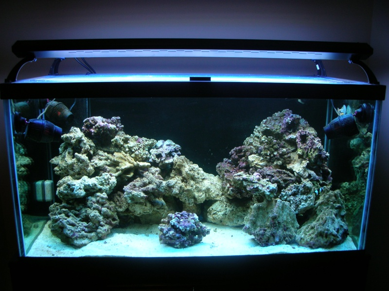Derek's 90 gal. reef build New_ta10