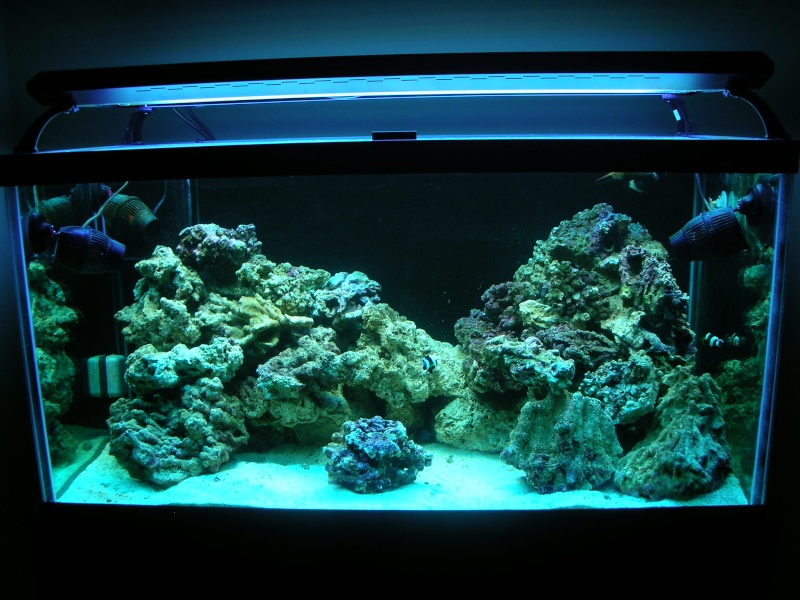 Derek's 90 gal. reef build - Page 2 New_ta12