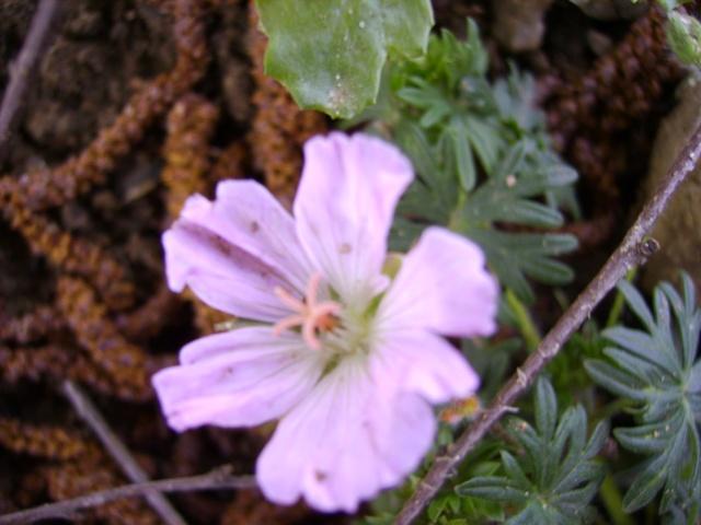 photo des plantes vivaces de mon jardin (photo du 28/04/09) Pict3010