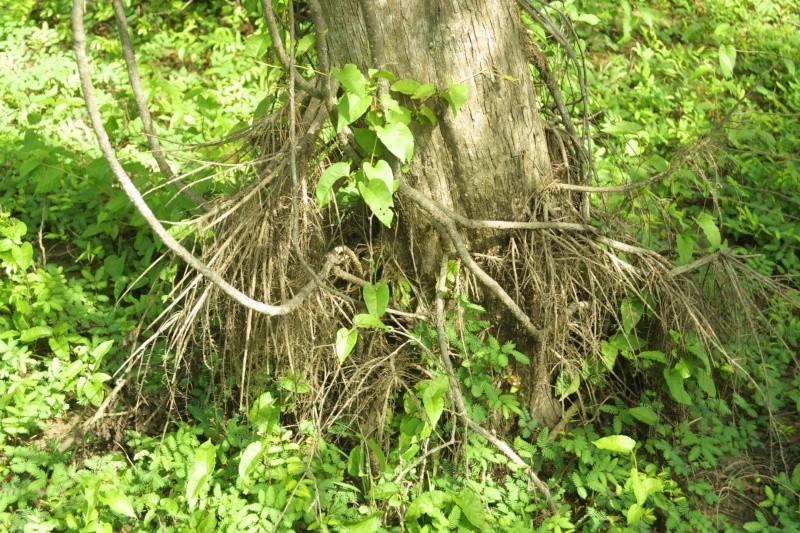 Swamp Layering? Img_8710