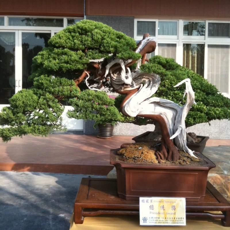 Mind Blowing Bonsai Exhibition Import13