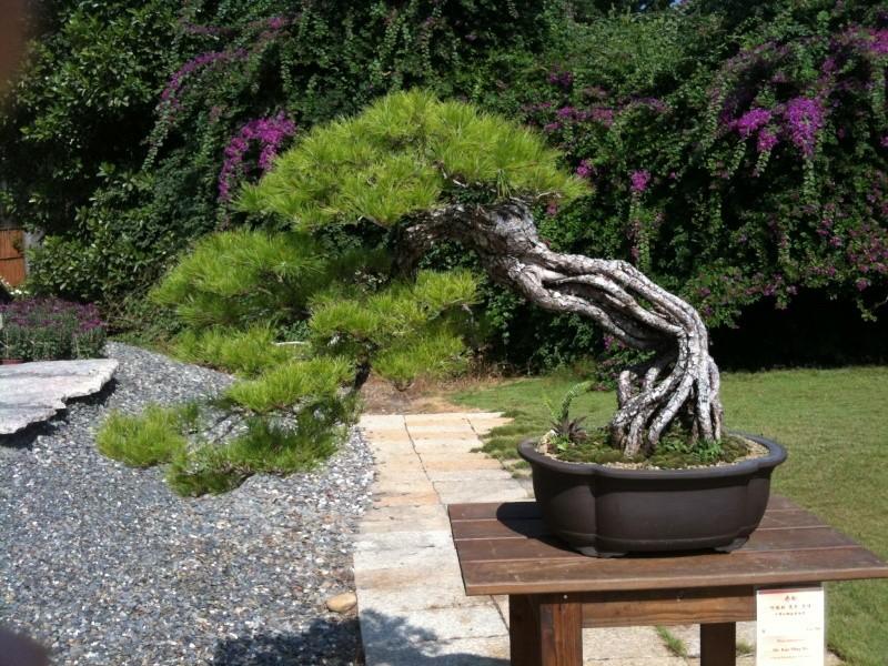 Mind Blowing Bonsai Exhibition Import15