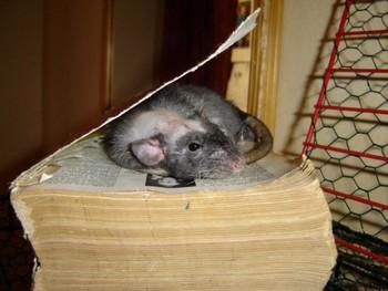 Bibliophilie Rat_de11
