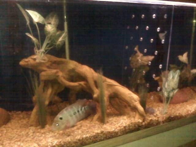 My DIY Tank Divider,.. Cid_im21