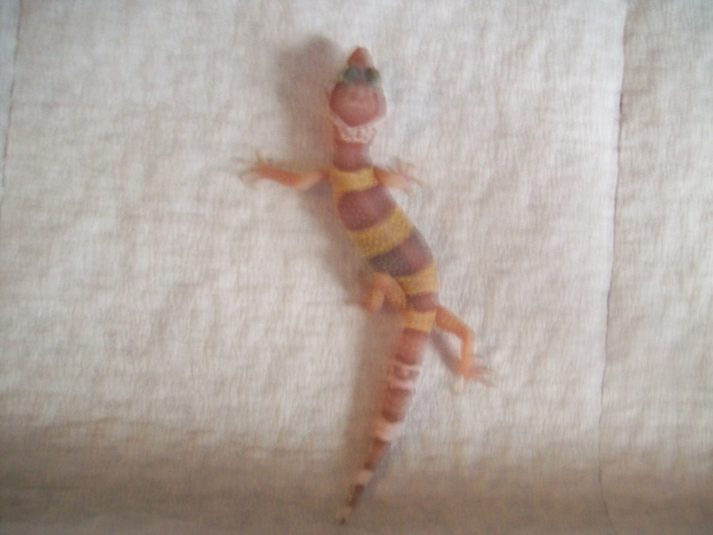 my new baby leopard gecko! 00511