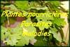 Informations plantes nourricières