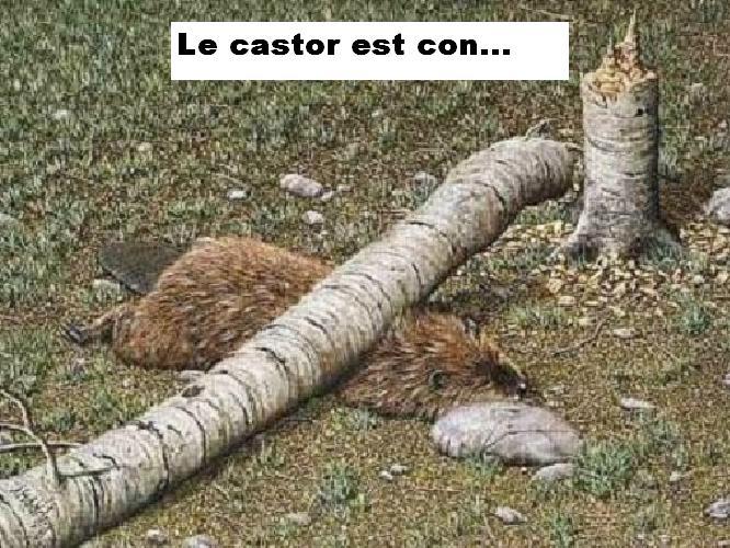 blague a gégé Castor10
