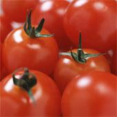tous les végétaux par alpha et en image Mkf02110
