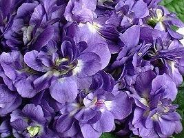 tous les végétaux par alpha et en image Violet10