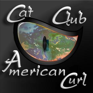 Cat Club American Curl's Forum / Forum du Cat Club American Curl