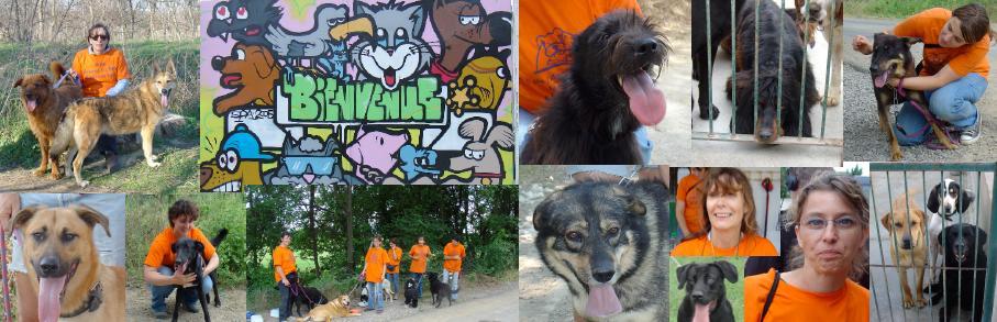 Forum des bénévoles promeneurs de chiens de la SPA de Montpellier