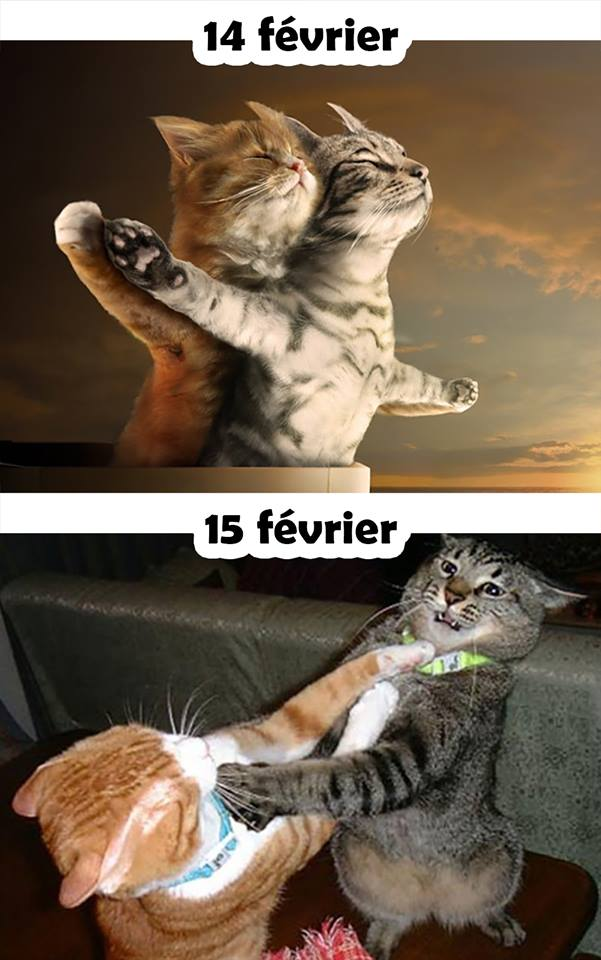 Lundi 18 Fevrier Humour64