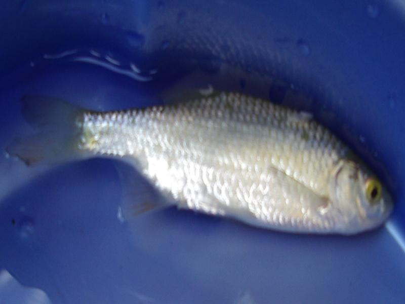 quels type de poissons? Poisso10