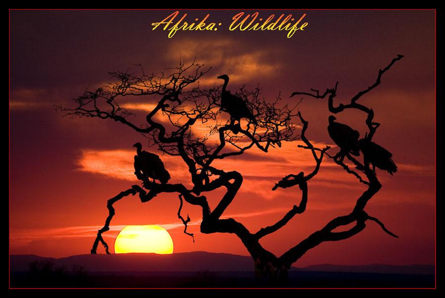 ♥|  Afrika: Wildlife | ♥