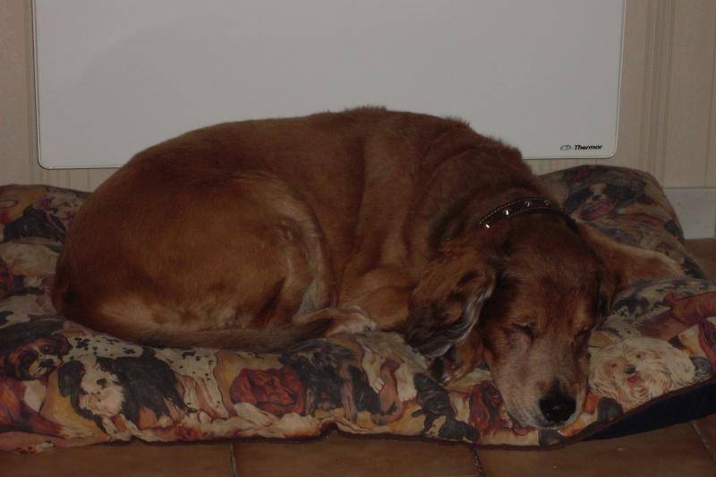 mon chien titou chèri. Sdc10310