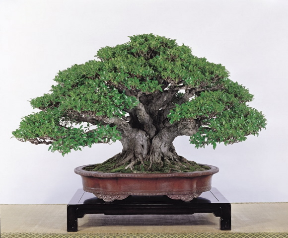 Tenth Asia Pacific Bonsai and Suiseki Exhibition Lo_mic10
