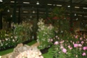 Notre visite aux floralies de NANTES le 11 05 2009 Dsc04112