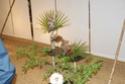 Notre visite aux floralies de NANTES le 11 05 2009 Dsc04125