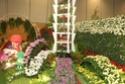Notre visite aux floralies de NANTES le 11 05 2009 Dsc04126