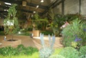 Notre visite aux floralies de NANTES le 11 05 2009 Dsc04128
