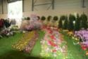 Notre visite aux floralies de NANTES le 11 05 2009 Dsc04131