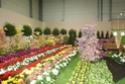Notre visite aux floralies de NANTES le 11 05 2009 Dsc04133