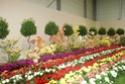 Notre visite aux floralies de NANTES le 11 05 2009 Dsc04134