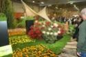 Notre visite aux floralies de NANTES le 11 05 2009 Dsc04138