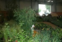 Notre visite aux floralies de NANTES le 11 05 2009 Dsc04143