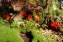 Notre visite aux floralies de NANTES le 11 05 2009 Dsc04146