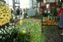 Notre visite aux floralies de NANTES le 11 05 2009 Dsc04210