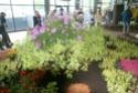 Notre visite aux floralies de NANTES le 11 05 2009 Dsc04211