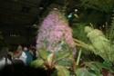 Notre visite aux floralies de NANTES le 11 05 2009 Dsc04218