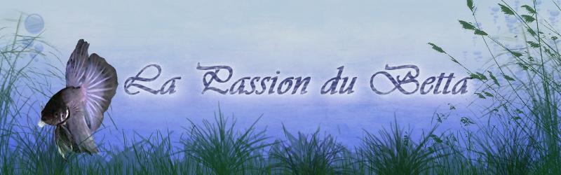 La Passion du Betta