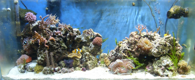 le reef tank d'harold - Page 6 Bac10