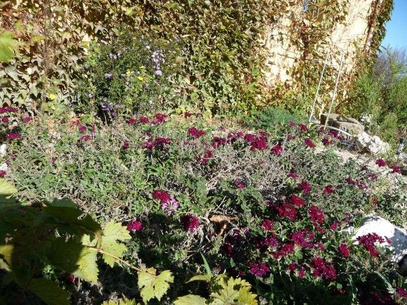 Les dernières fleurs 2009! P1060110