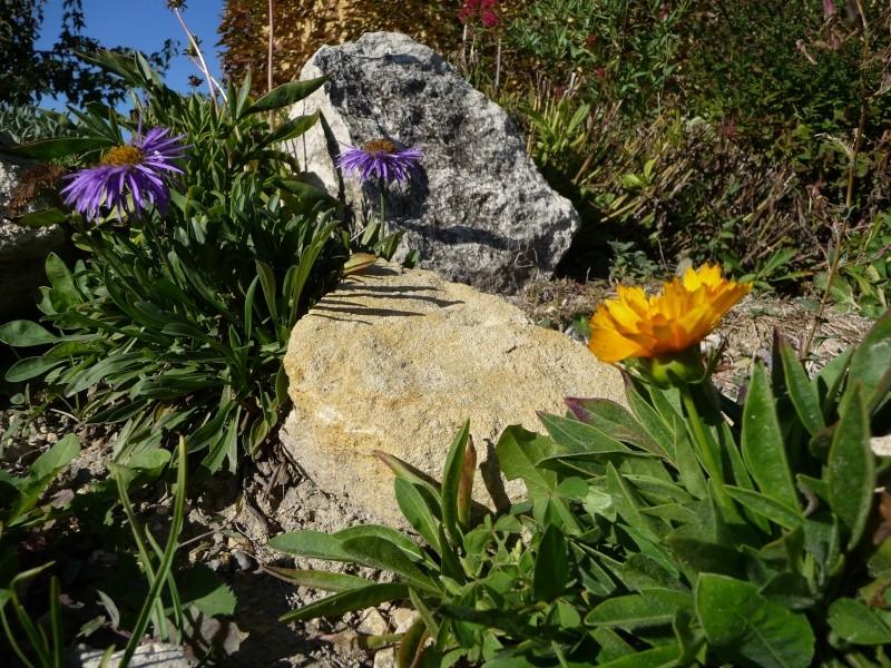 Les dernières fleurs 2009! P1060111
