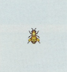 Tutti gli insetti Apeope10