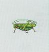 Tutti gli insetti Cavall10