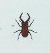 Tutti gli insetti Cervov10