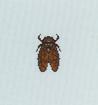 Tutti gli insetti Cicala10