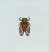 Tutti gli insetti Cicala11