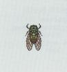 Tutti gli insetti Cicala12