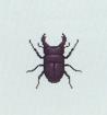 Tutti gli insetti Coleot10