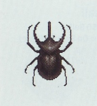 Tutti gli insetti Coleot11