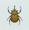 Tutti gli insetti Coleot12